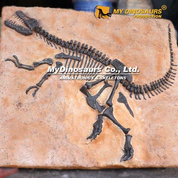 T REX Fossil Plate 4