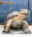 Animatronic Tortoise 1