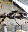 Archelon Turtle skeleton