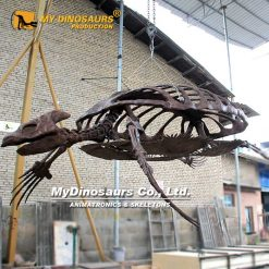 Archelon Turtle skeleton