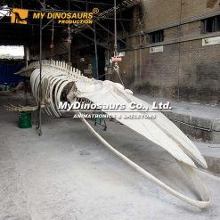 Blue whale skeleton 2