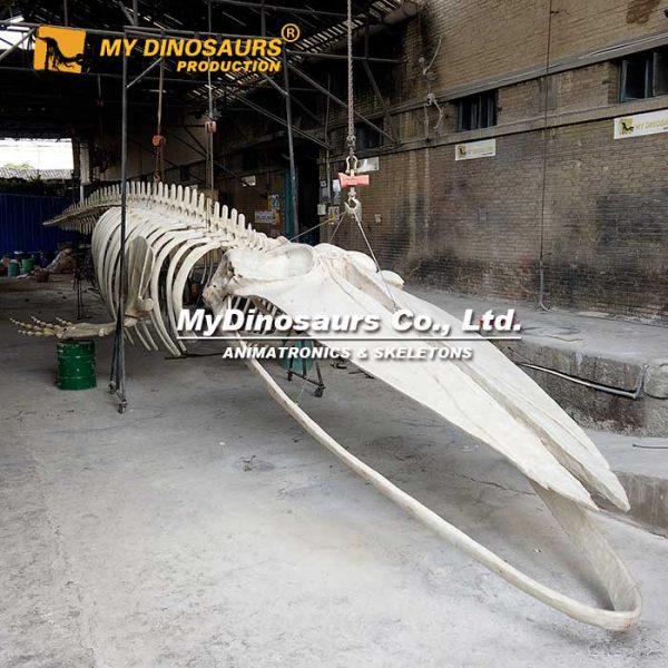 Blue whale skeleton 2