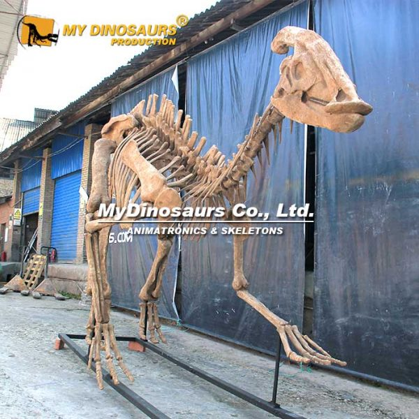 Parasaurolophus skeleton 1