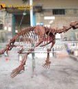 allodesmus skeleton