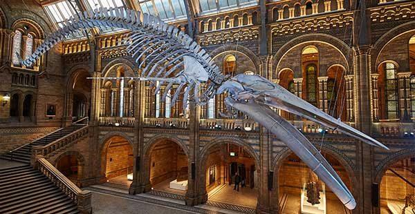 blue whale hintze hall news1