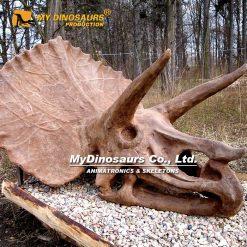 Triceratops Skull 1