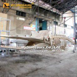 Cachalot Skeleton
