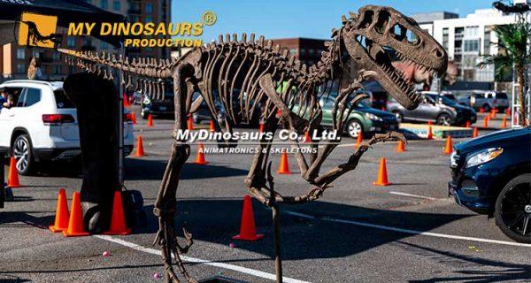 Utahraptor skeleton for sale