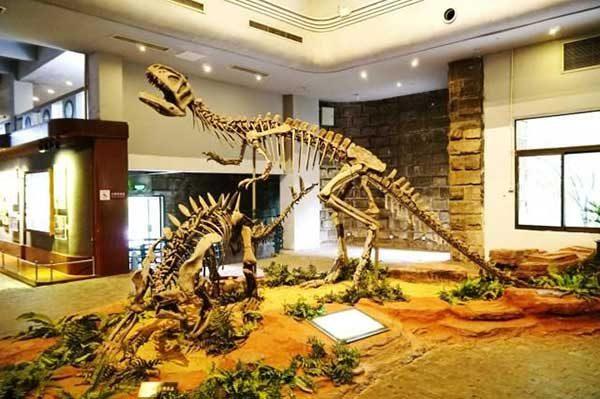 Zigong Dinosaur Museum4