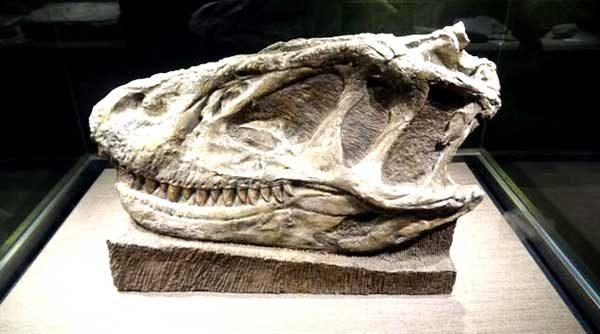 Zigong Dinosaur Museum6