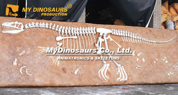 Allosaurus Fossil Plate 1
