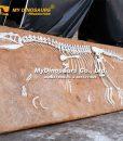 Allosaurus Fossil Plate