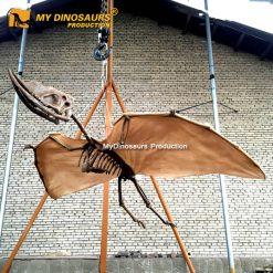 Dsungaripterus Skeleton