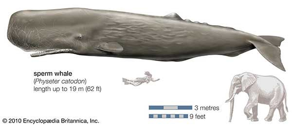 Deep in the Sea Enormous Whales 1