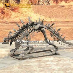 Huayangosaurus skeleton 2