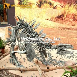Huayangosaurus skeleton 4
