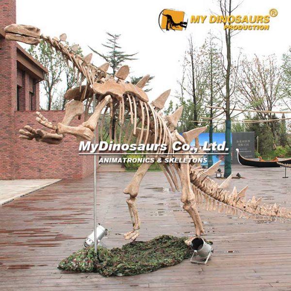Tuojiangosaurus skeleton 1