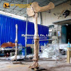 dinosaur leg joint fossil