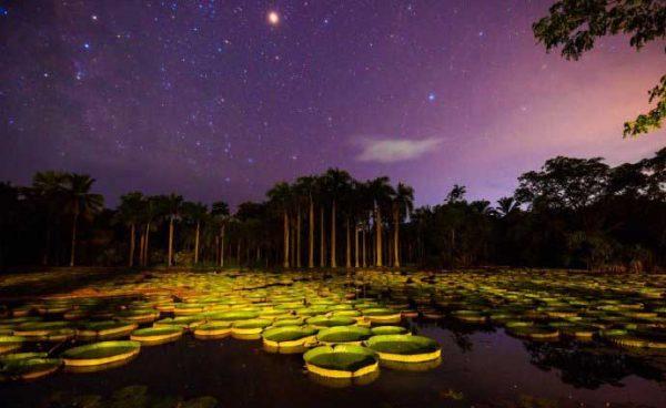 8 Best Botanical Gardens in the World