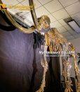 gold mammoth skeleton 5