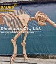 mammoth skeleton (3)
