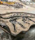 dinosaur fossil dig site