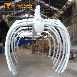 whale ribcage skeleton 2